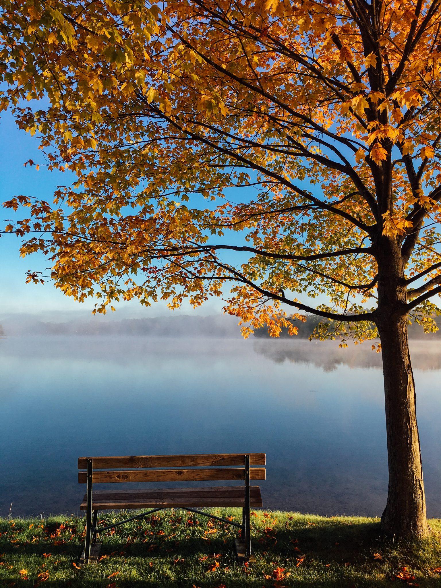 Als je je aanmeldt voor mindfulness training, planten wij een boom